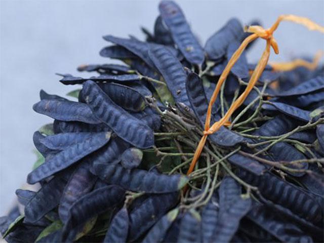 7 loại thảo dược thiên nhiên chưa bệnh bạc tóc quả bồ kêt