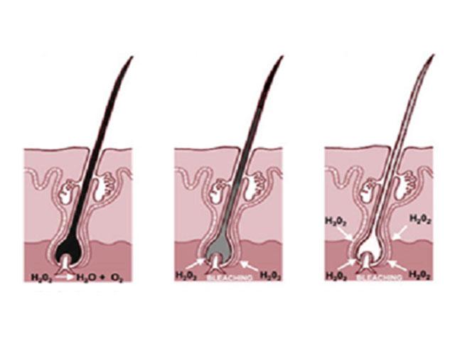 Quá trình tóc đen chuyển sang tóc bạc